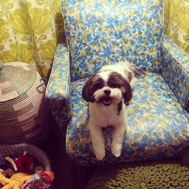 La foto del perrito.