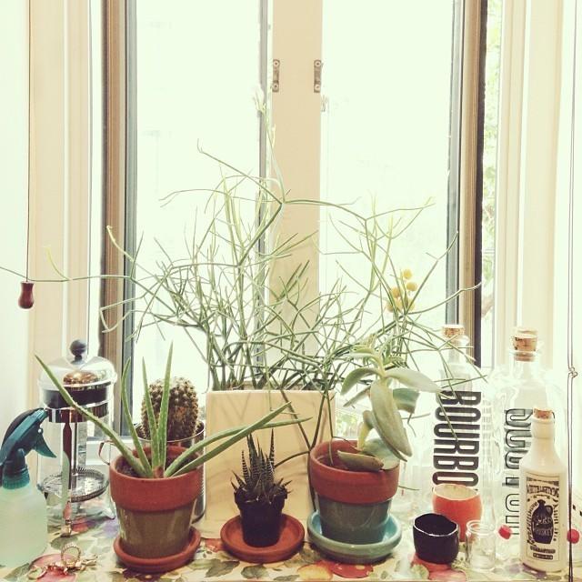Plantas en la ventana.