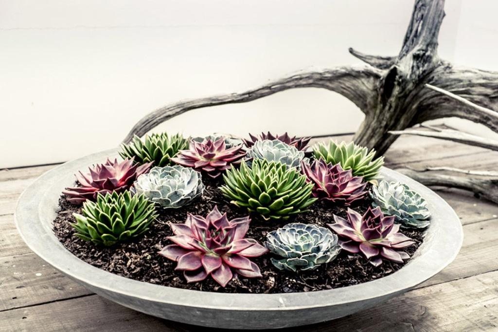 Una jardinera con diferentes tipos de cactus de diferentes colores.