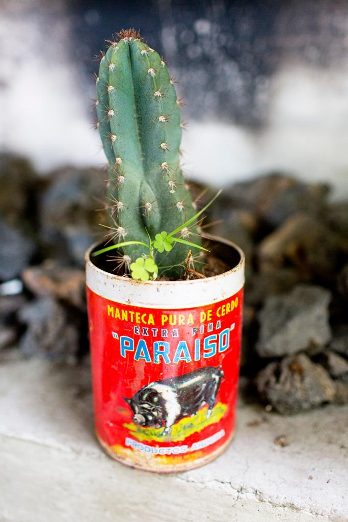 Cactus.